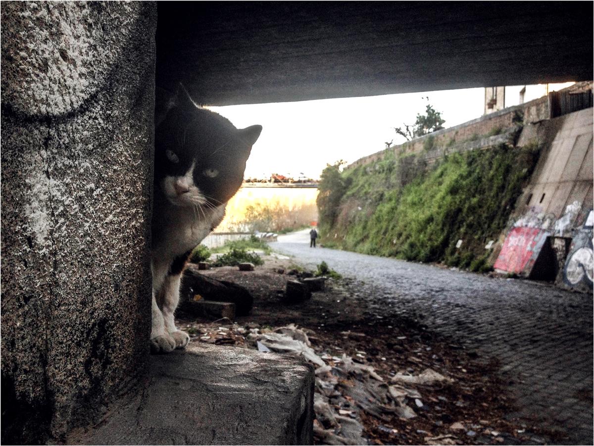Foto di un gatto sul lungo tevere a Roma durante un uscita in bicicletta.