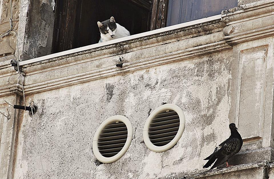 """Roma Street Photography - """" Mi è sembLato di vedeLe un gatto """" - San Lorenzo © Rossella Santoro"""